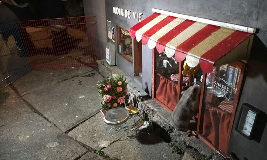 little-mouse-shop-sweden-anonymouse-03