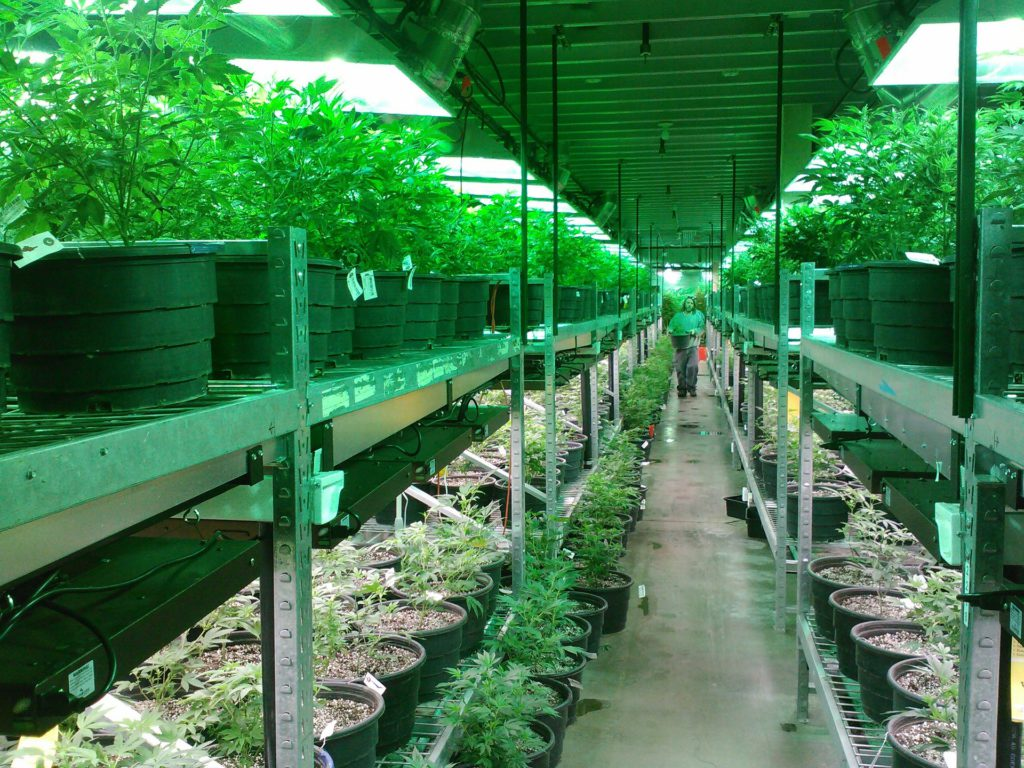 marijuana-pixabay
