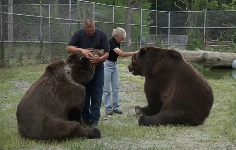medved-kodiak-2