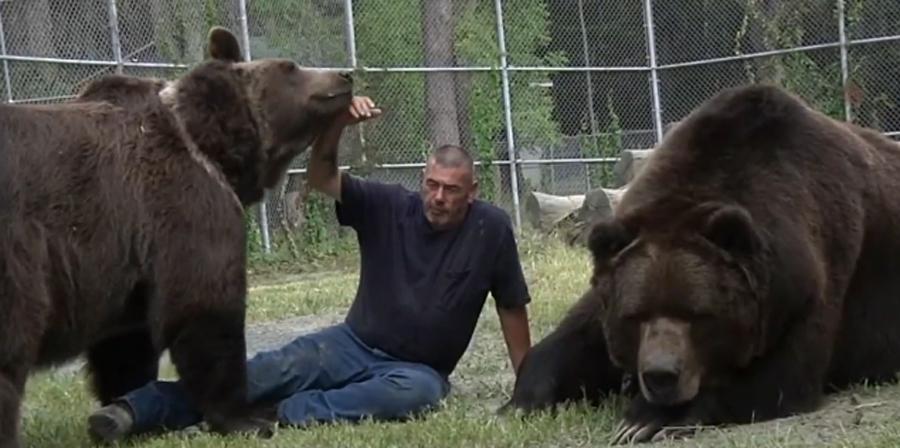 medved-kodiak-4