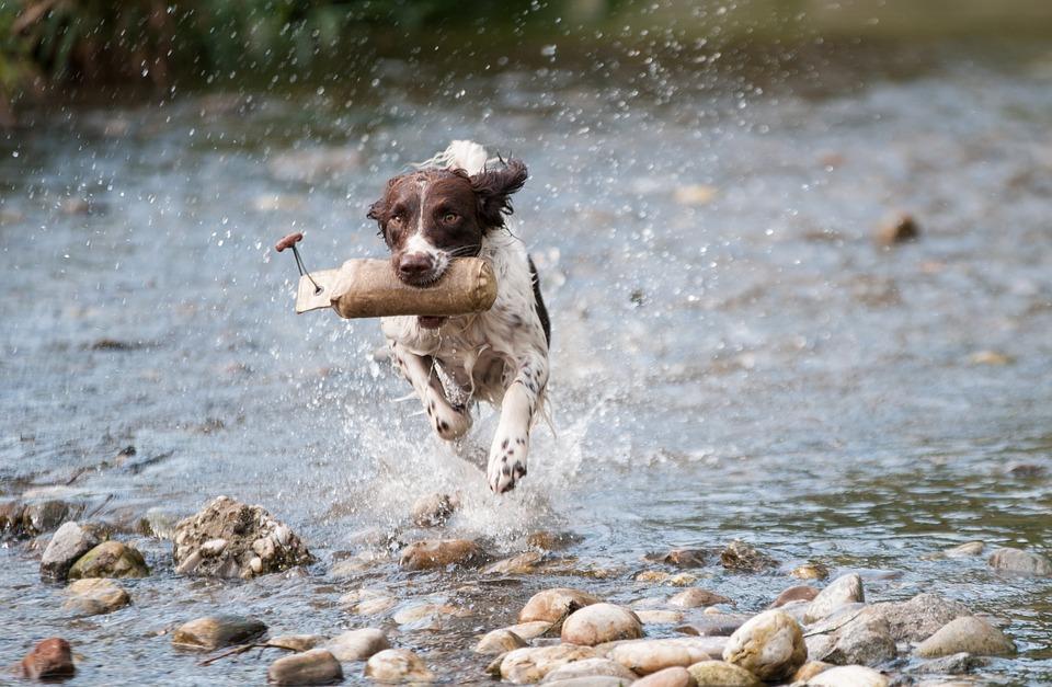 pes voda