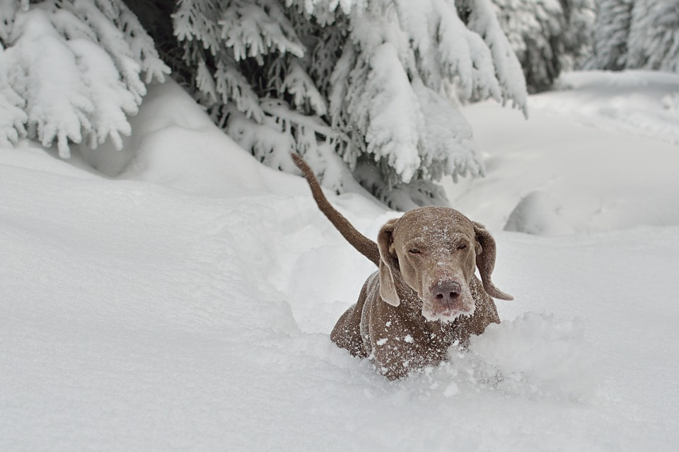 pix pes zima1