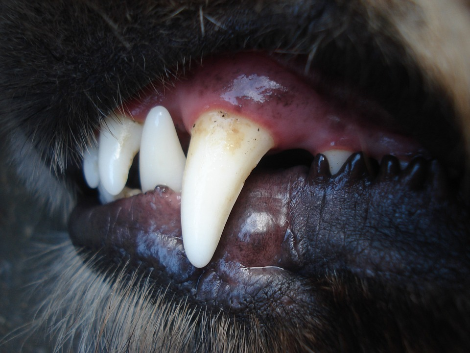 pix pes zuby